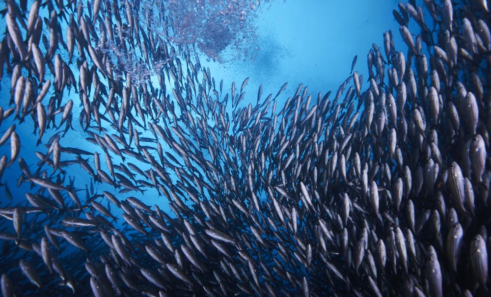 Galapagos_2035.jpg