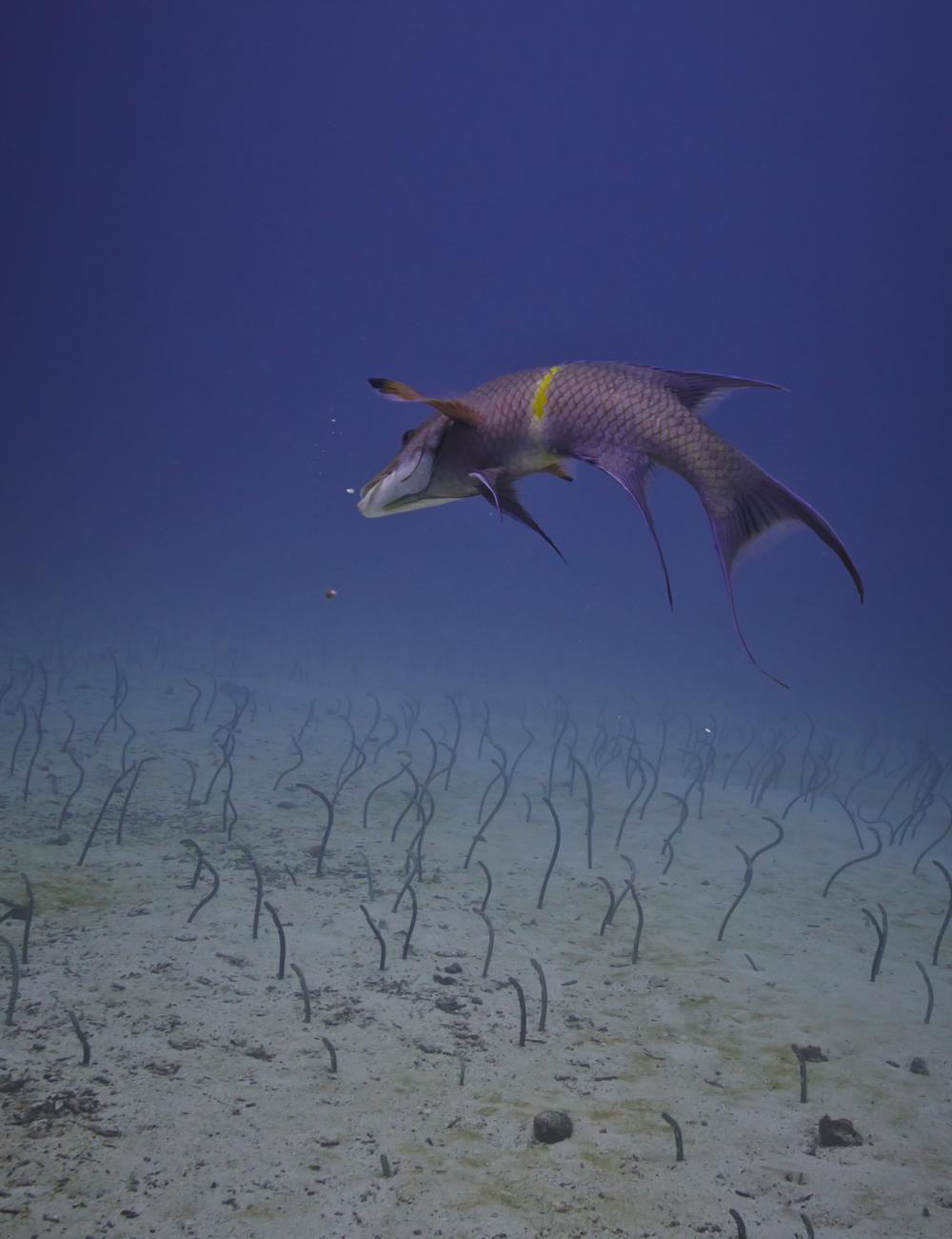 Galapagos_2089.jpg