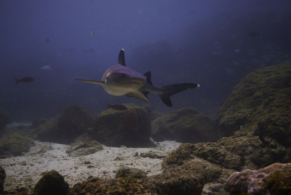 Galapagos_2193.jpg