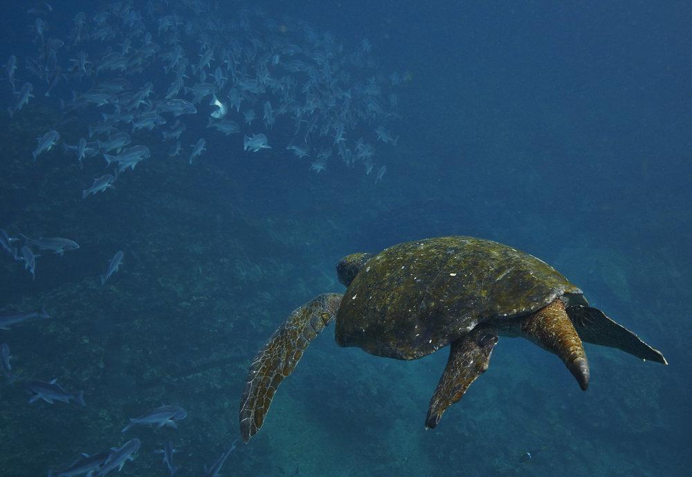 Galapagos_0631.jpg