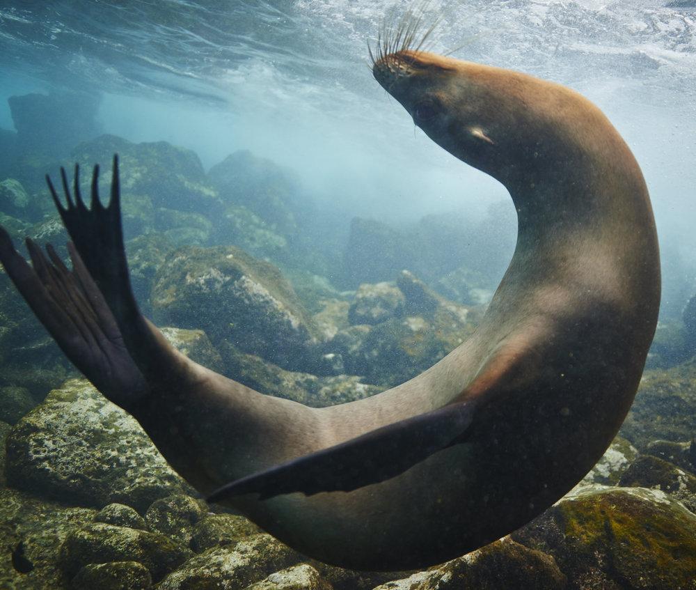 Galapagos_2569.jpg