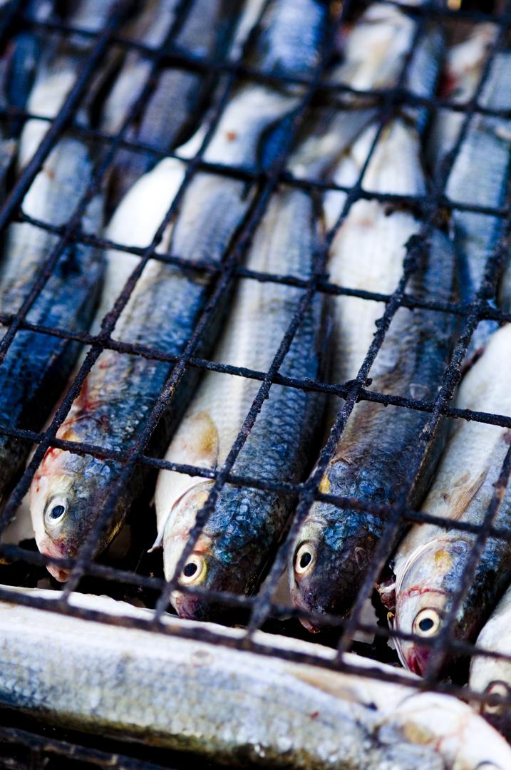 bokkom_fish.jpg