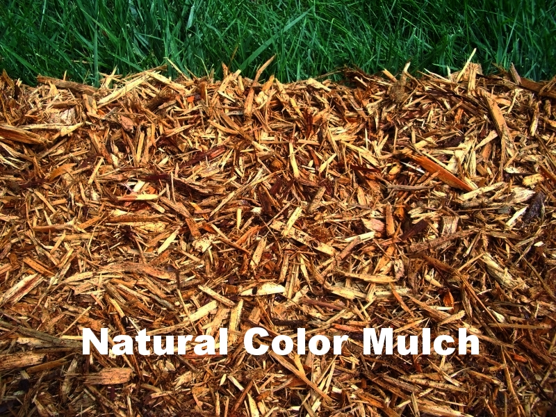 Natural   and   Dyed Mulch