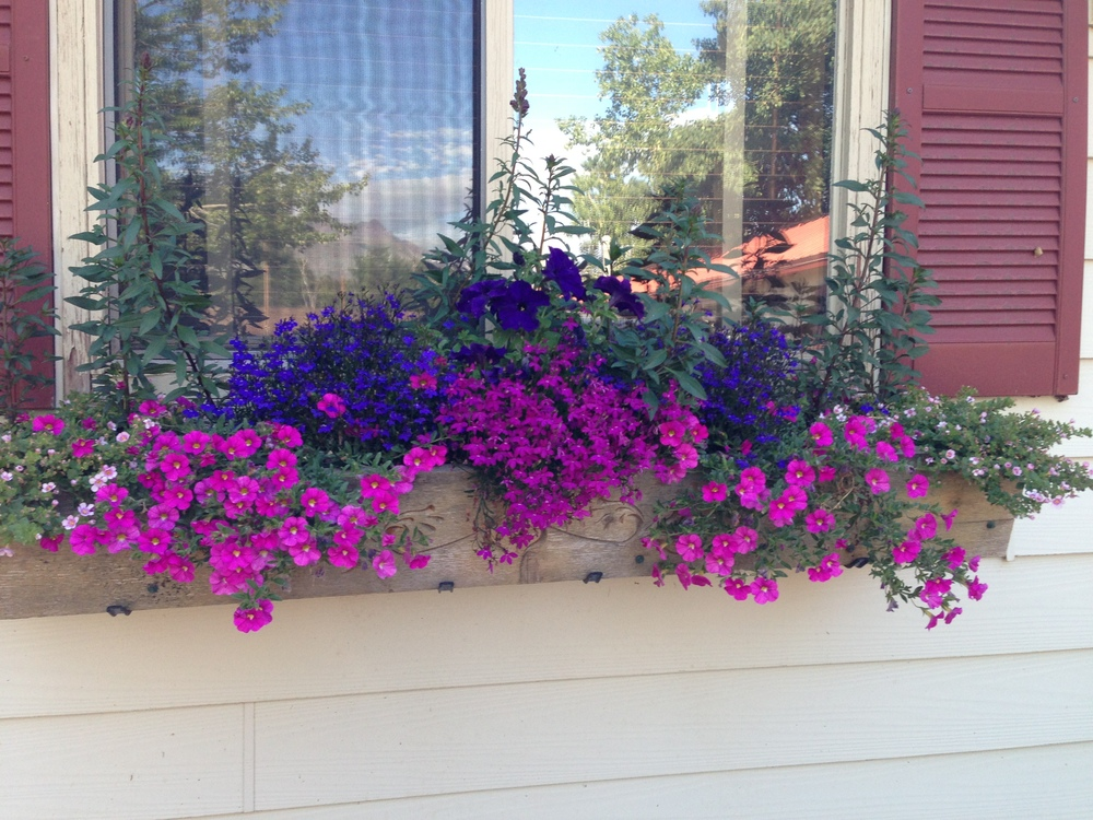 Hand-made flower boxes burst with blooms. They're beautiful but wait until you behold  Glacier's  meadows.