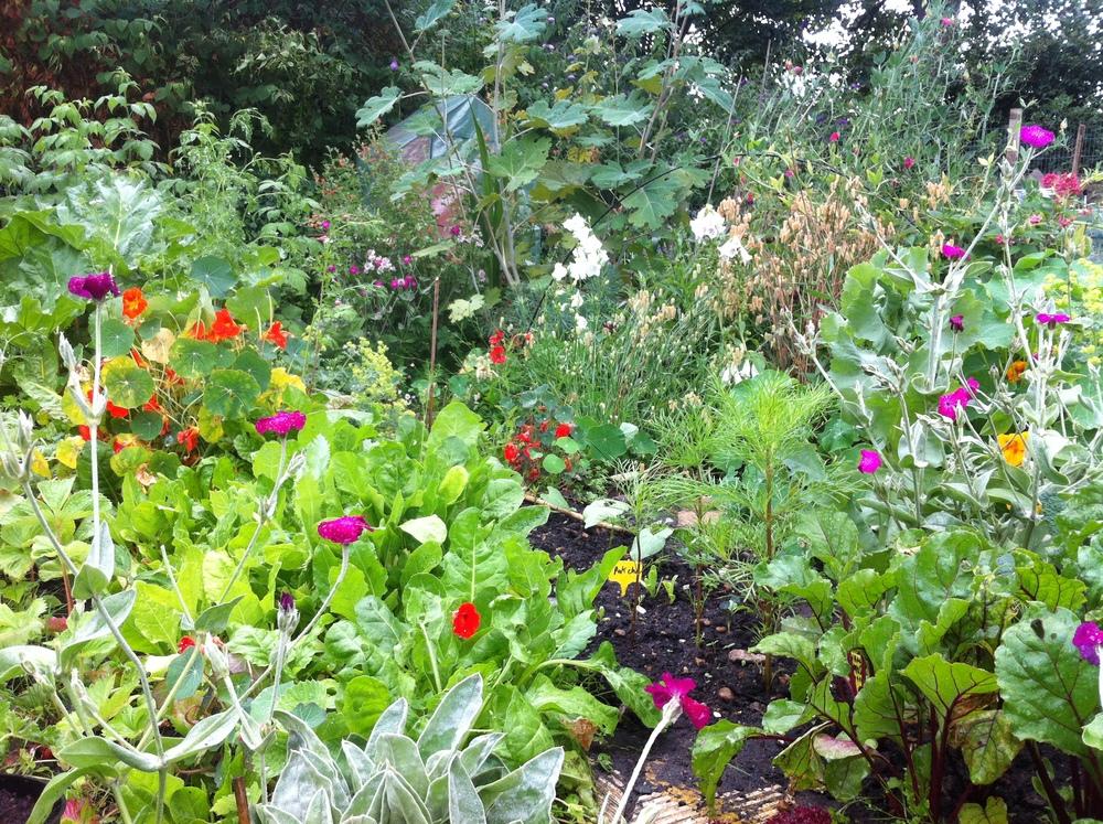 garden summer 2014.jpeg