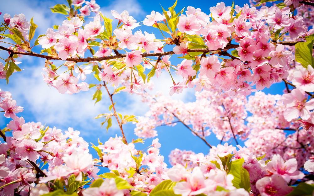 School Spring Pictures