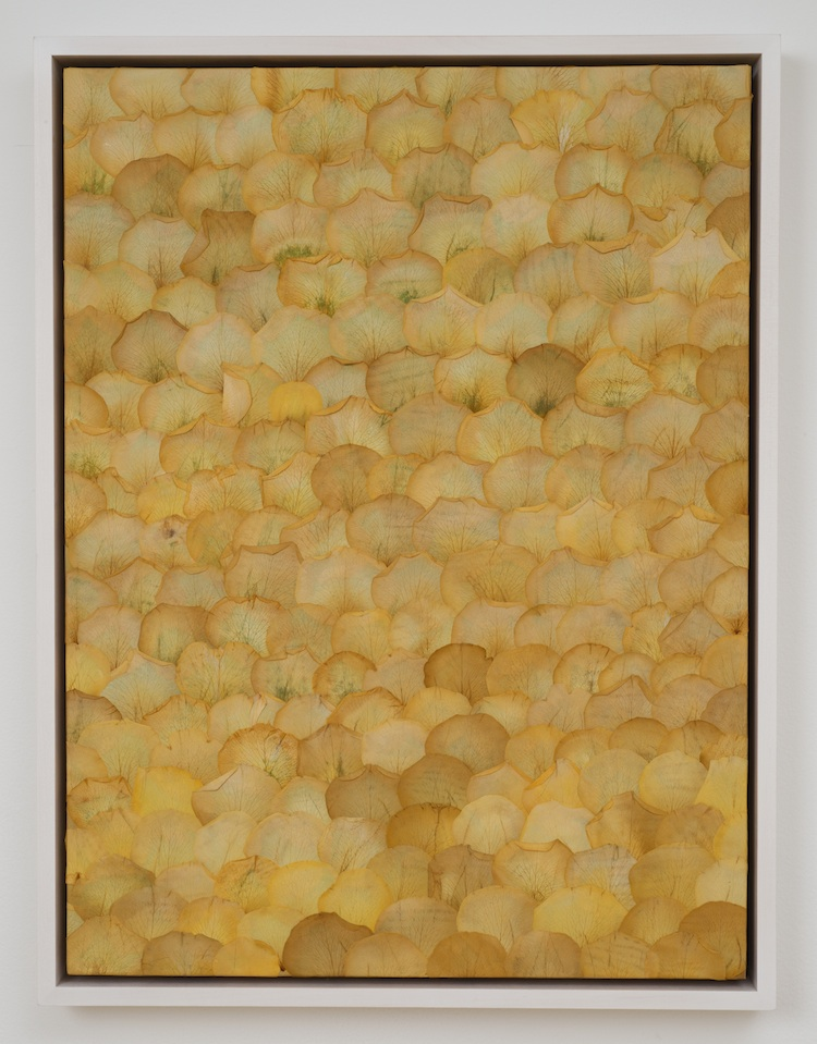 Gold Rush   2013 Pressed botanicals on wood 24 x 18 in/61 x 45.7 cm