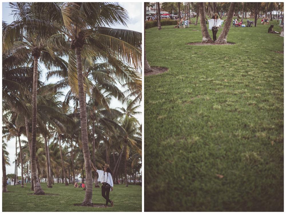 Miami tree.jpg
