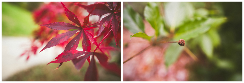 Proposal Flower Details.jpg