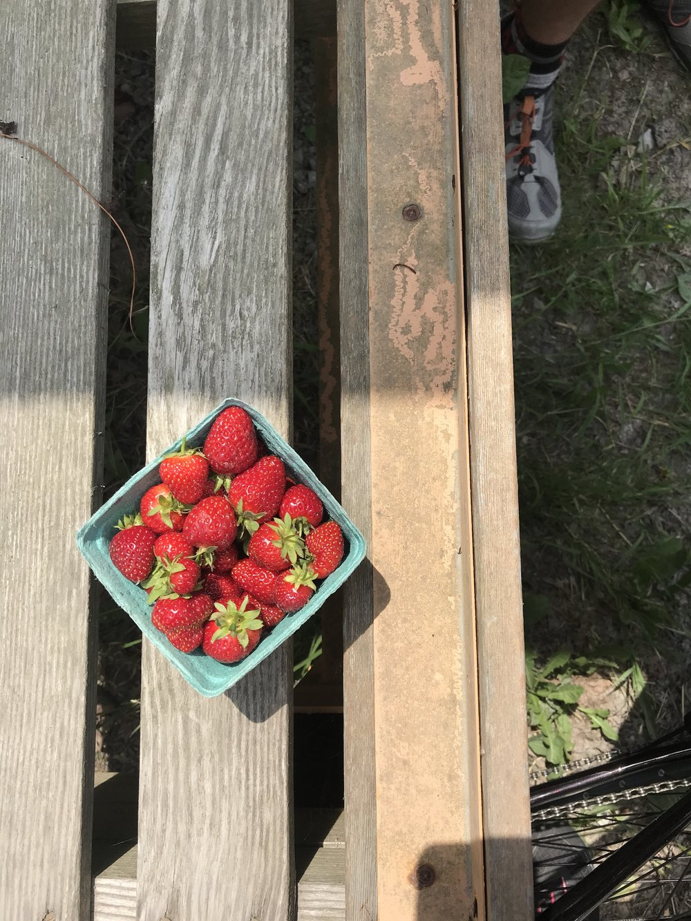 ...and ate these strawberries.