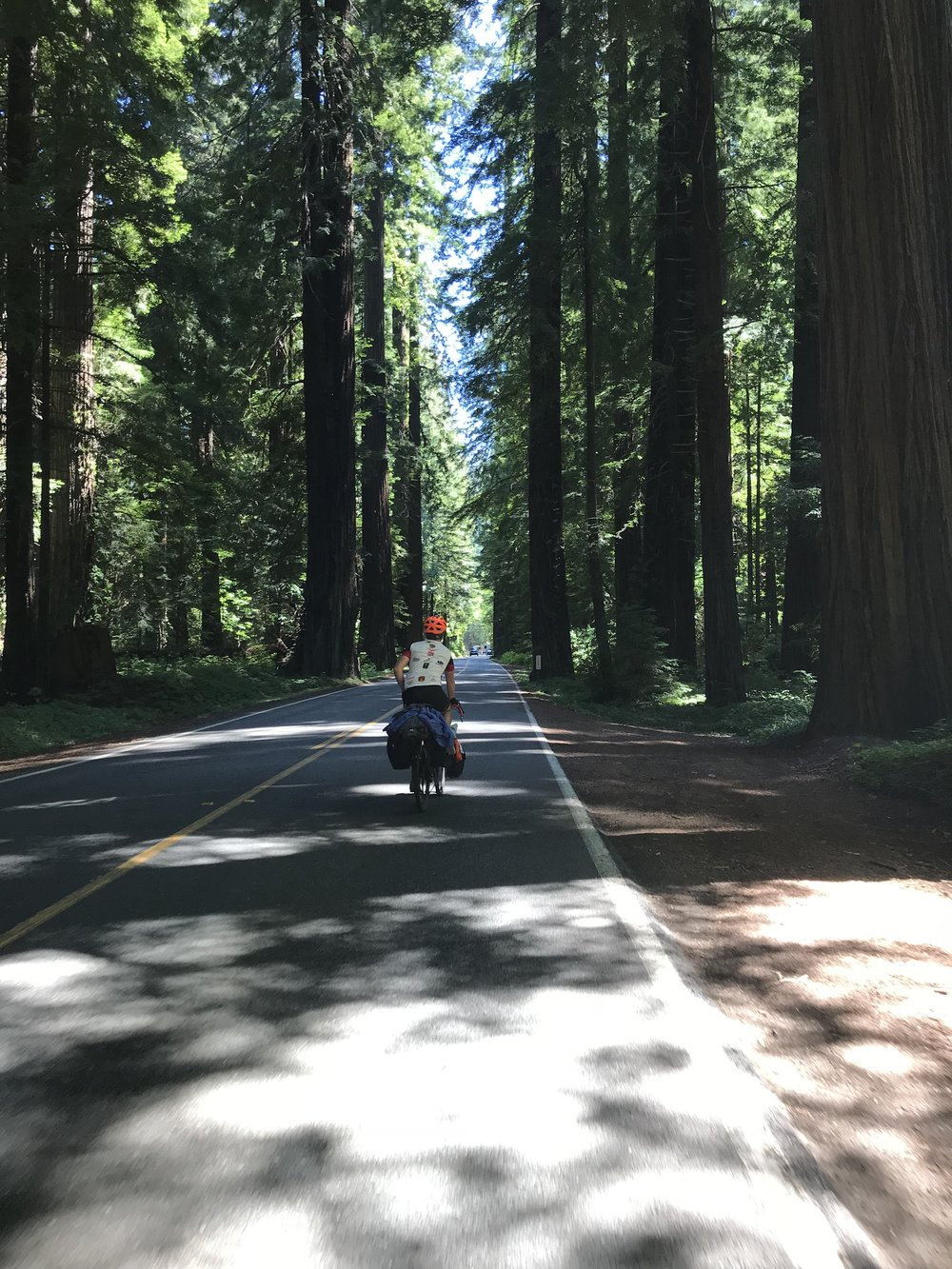 Beginning the Avenue of the Giants.