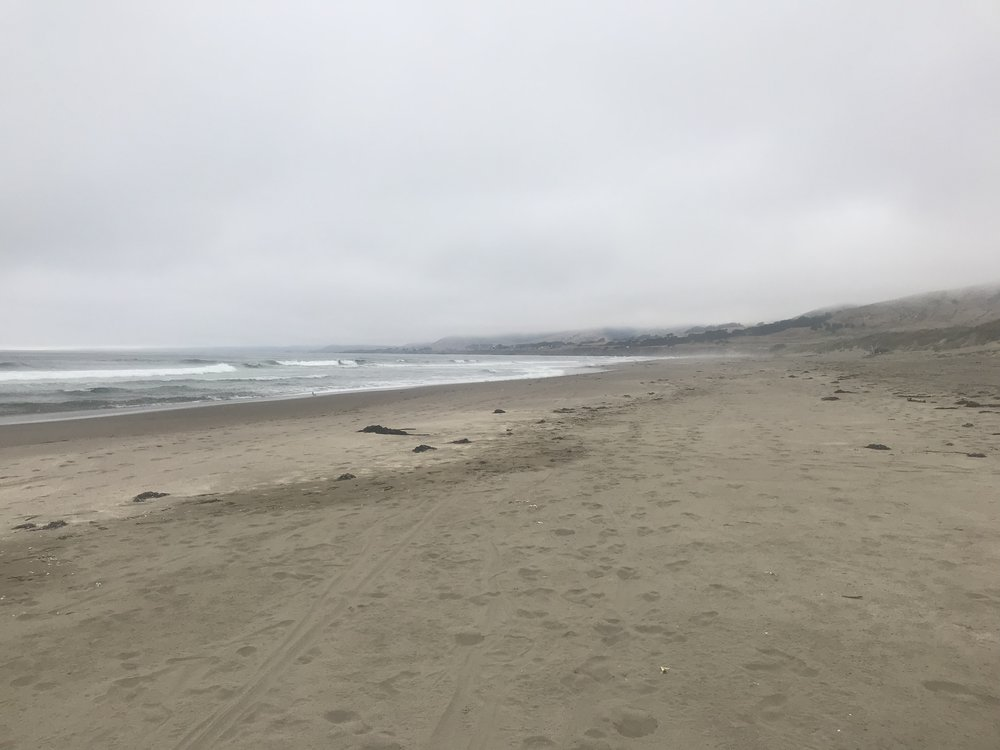 The beach at Bodega Dunes State Park.