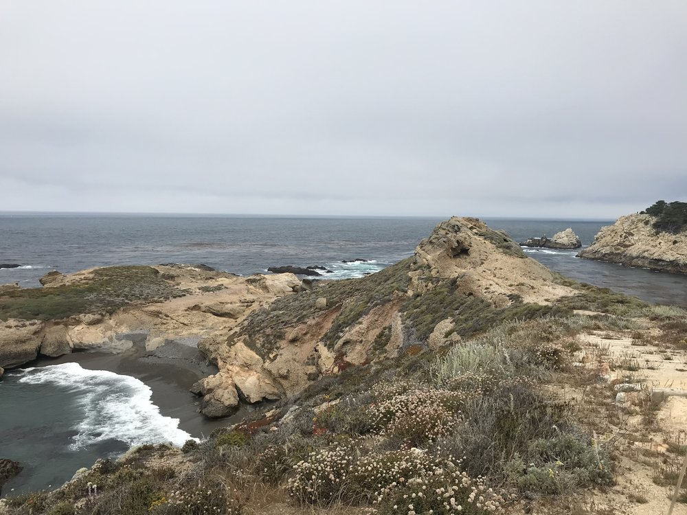 On the way to Big Sur we stopped at Point Lobos to see sea lions, but also had the luck of seeing a pod of humpback whales feeding right off shore.