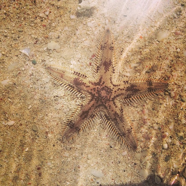 Natures Super Star find this morning! Wishing all of our supporters a Super Weekend #superhope #thinksuper #superstar #starfish #picoftheday #happy #weekend