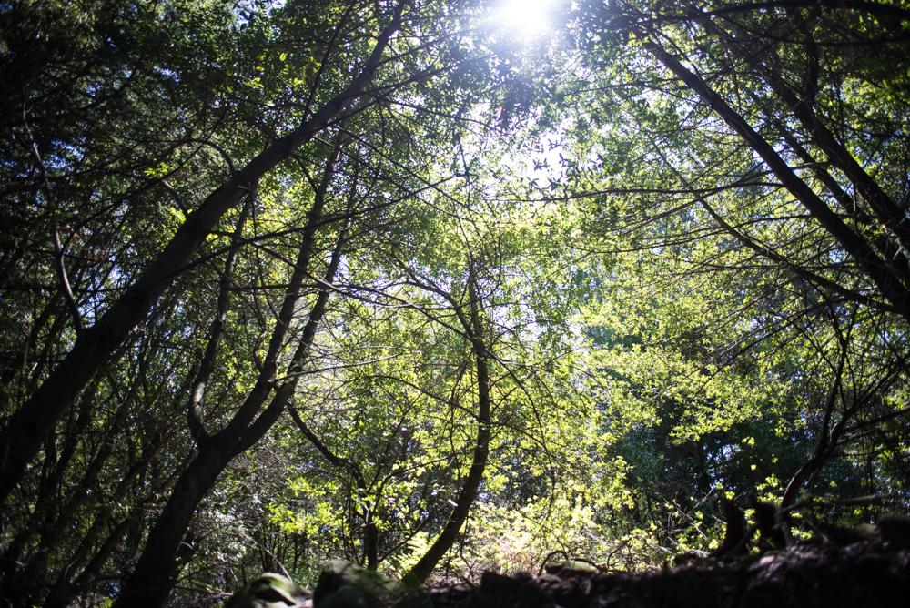 canopy-of-trees.jpg