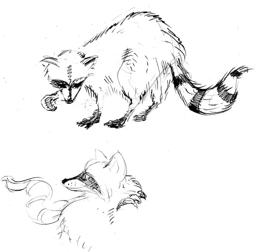 raccoons_03.jpg