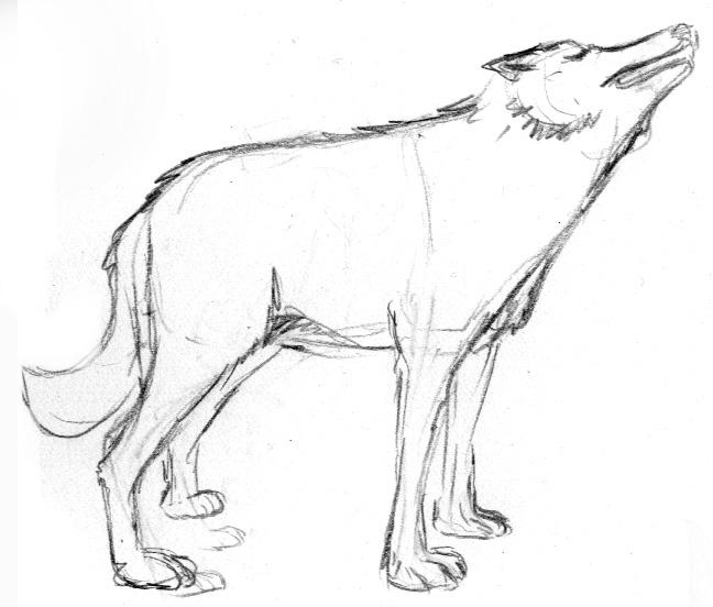 wolf_03.jpg