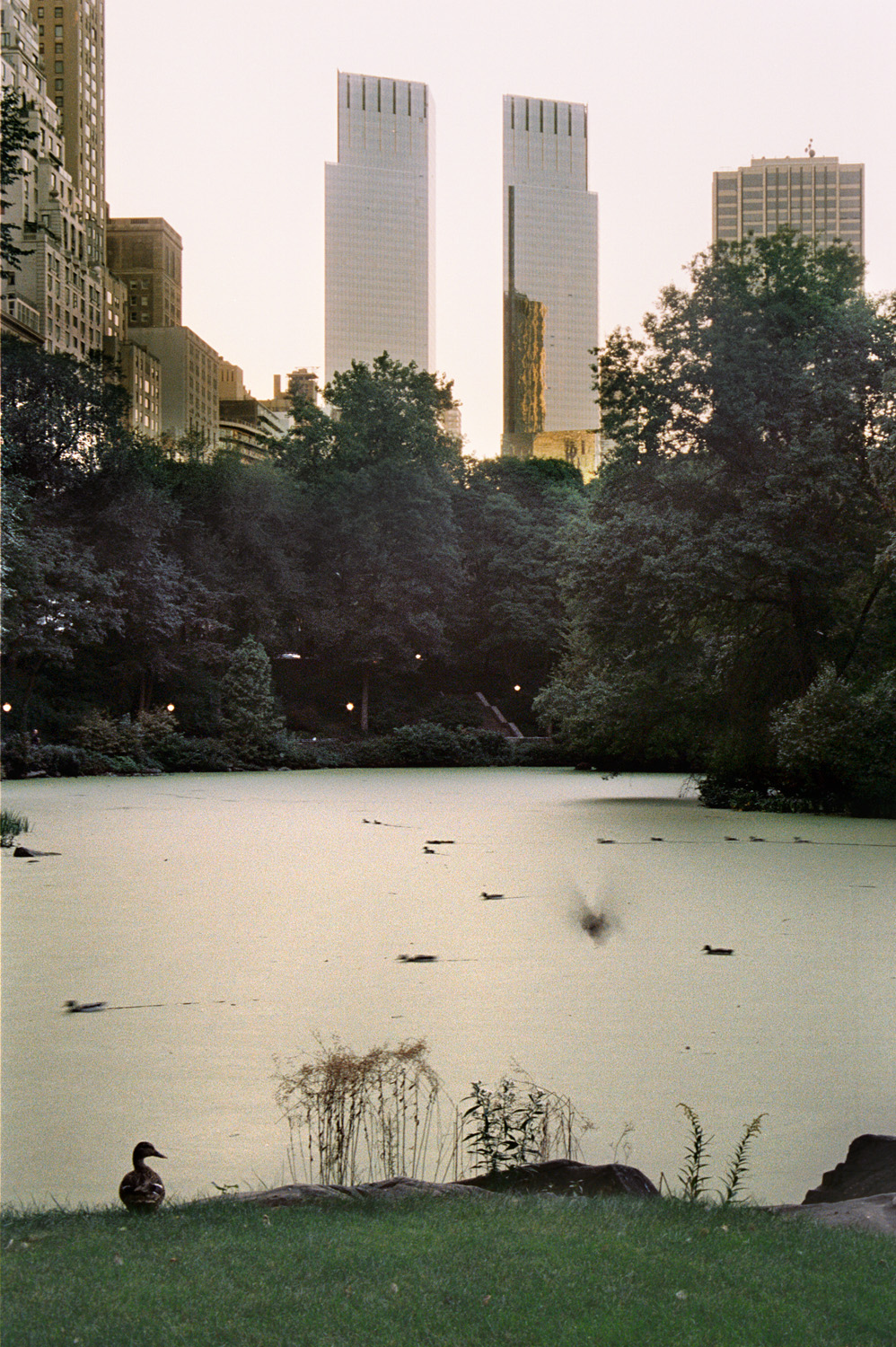 Central Park, New York (RES magazine)