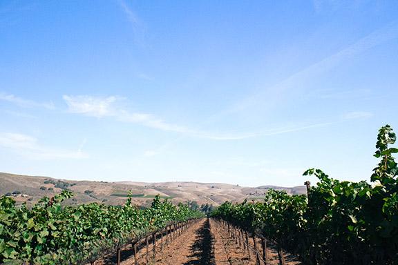 100% Organic La Encantada Vineyard, Sta Rita Hills