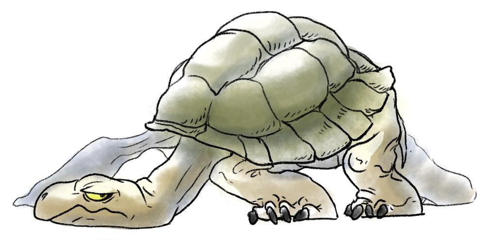 tortoiseboy.jpg