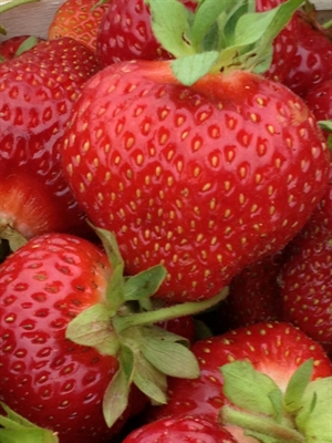Strawberries  Pack Detail   Tier/Layers      Qty/Pallet 8 x 1 qt flat           6/9                   54