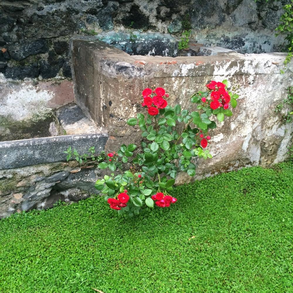 monacci flowers.jpg