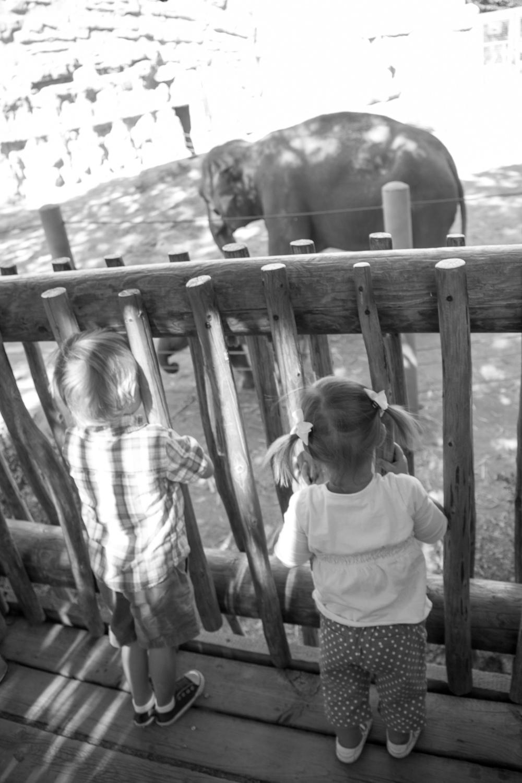 zoo-trip-selectives-35.jpg