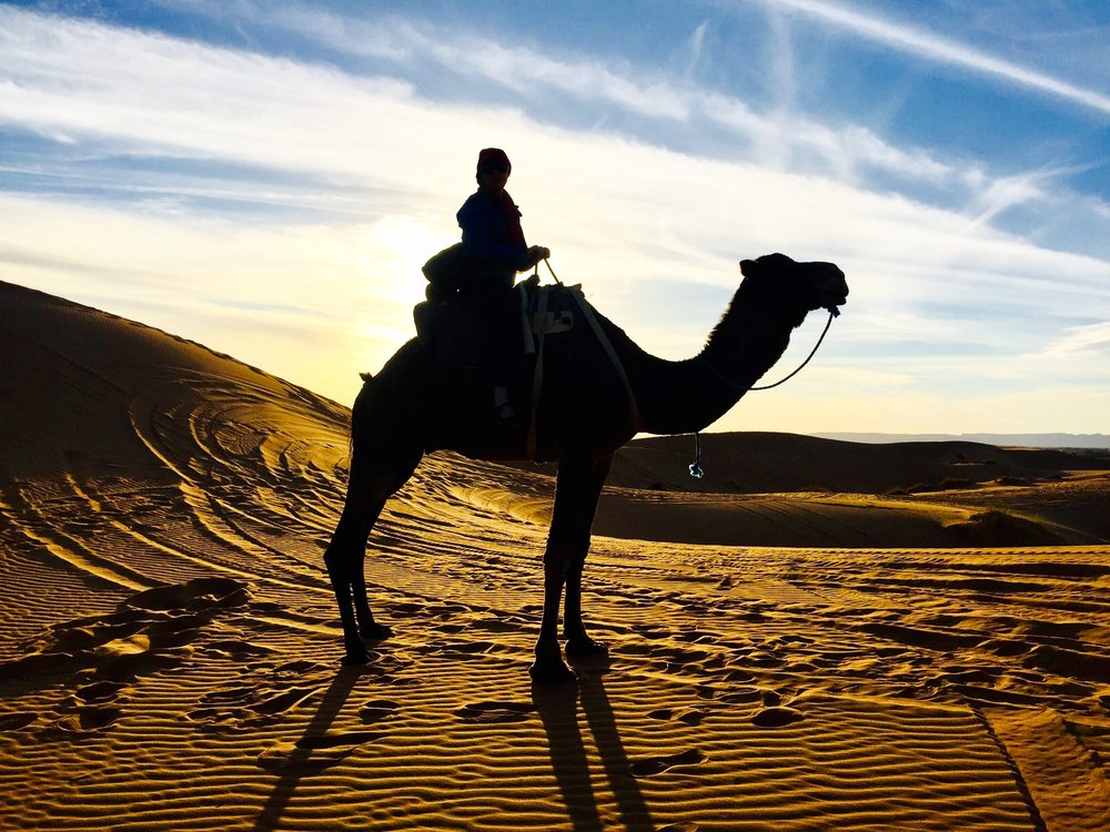 Sunset Camel trek in the sahara desert