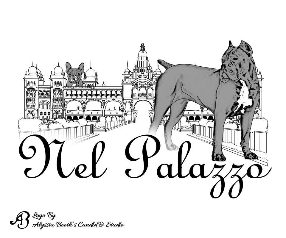 Nel Palazzo Logo