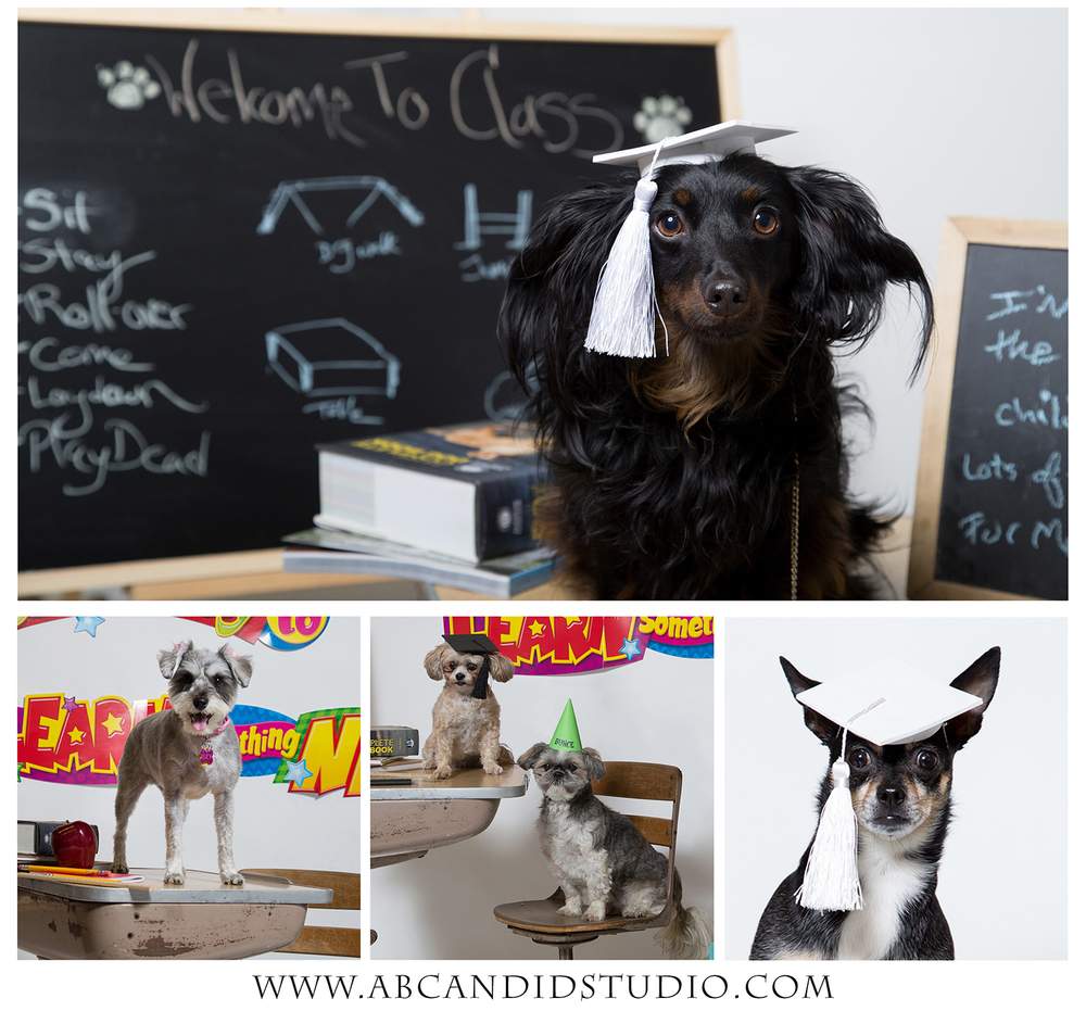 PetX Photo Day | Back To School | Alyssia Booth's Candid & Studio | Pet Photographer
