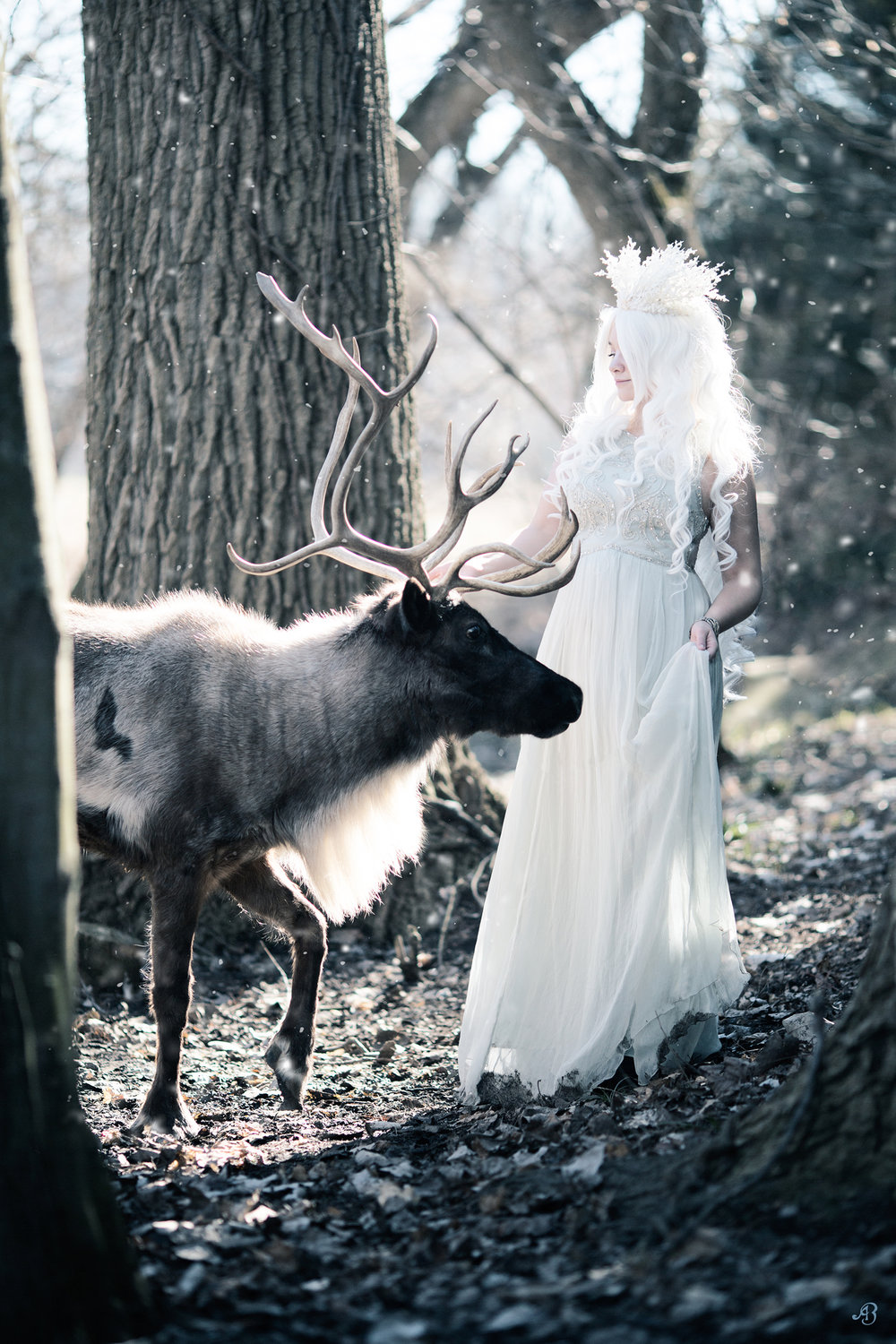 Greeting | Reindeer | Alyssia Booth Photographer | www.abcandidstudio.com
