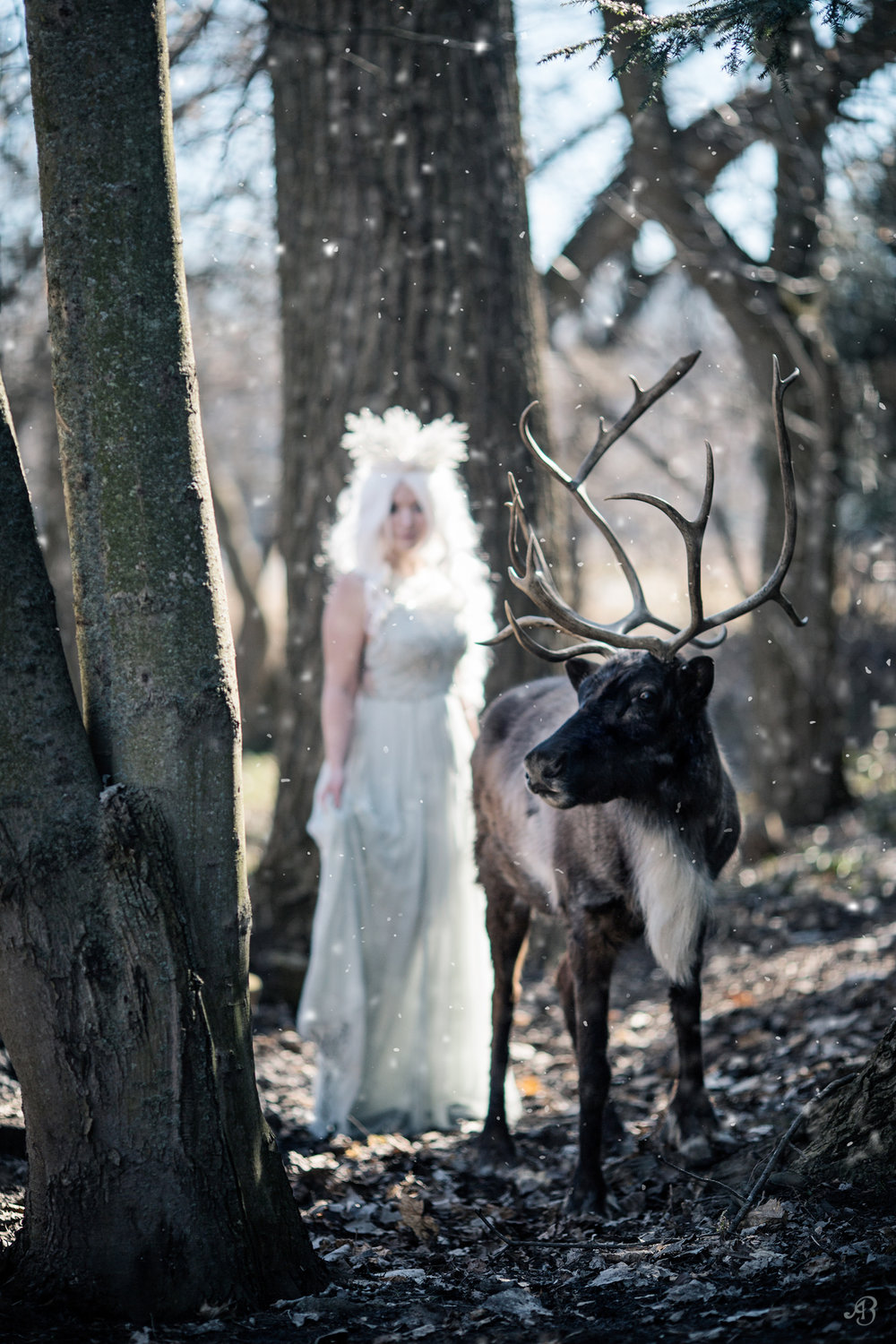 Winter Spirit | Reindeer | Alyssia Booth Photographer | www.abcandidstudio.com