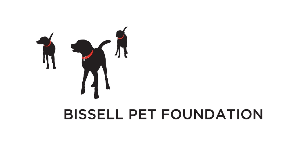 The BISSELL Pet Foundation Freelance Content and Digital Strategy