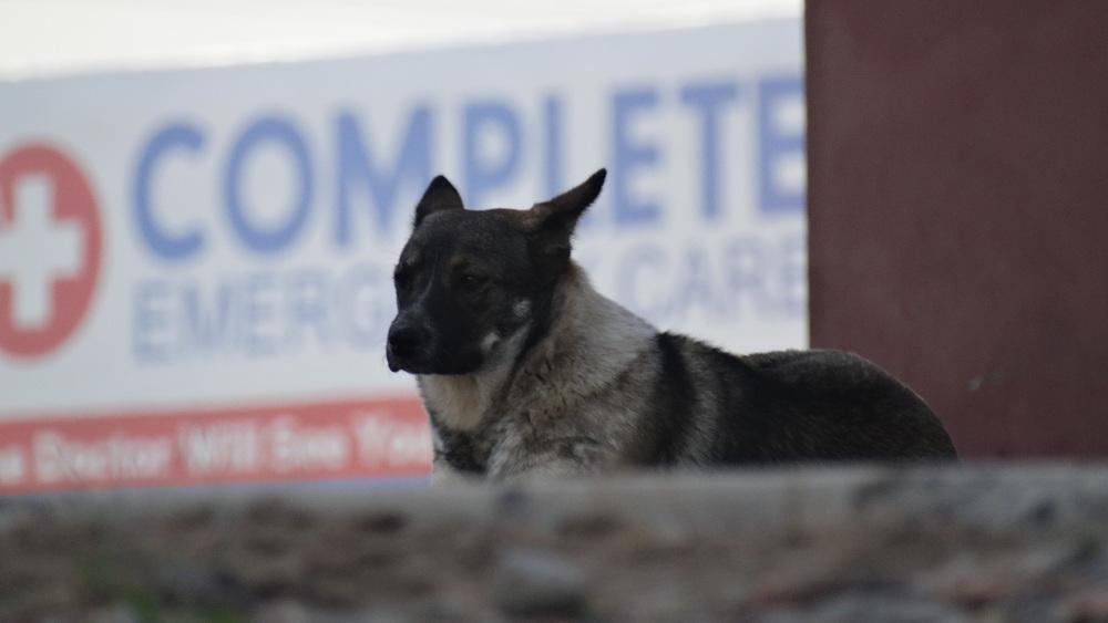 DogCloseUp2.jpg