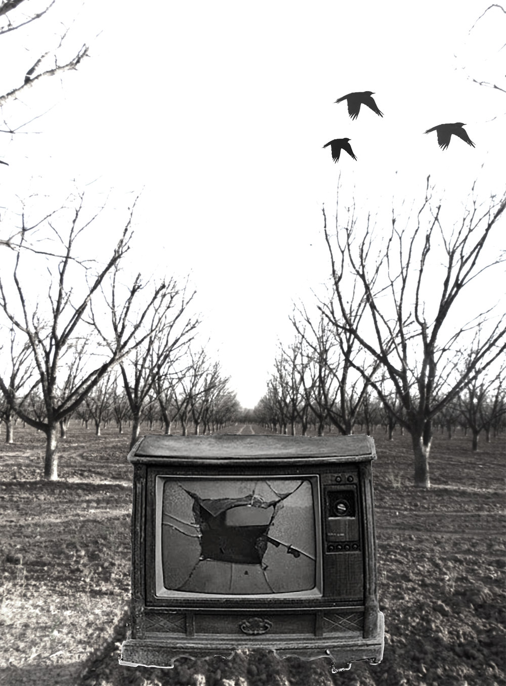 Television-Trees-3-29.jpg