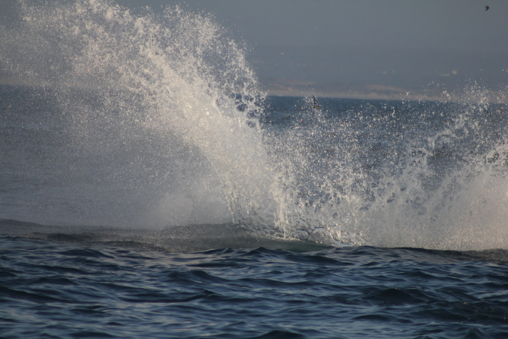 Splashes from a Humpback Whale Breach, Monterey Bay, California  Photo Credit: Liz Summit, 2014