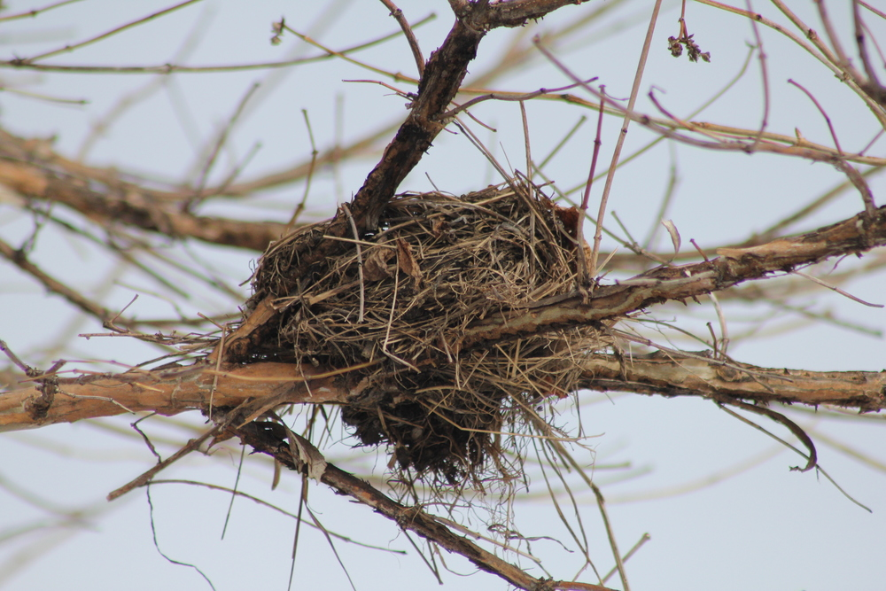 Nest  Photo Credit: Liz Summit, 2015