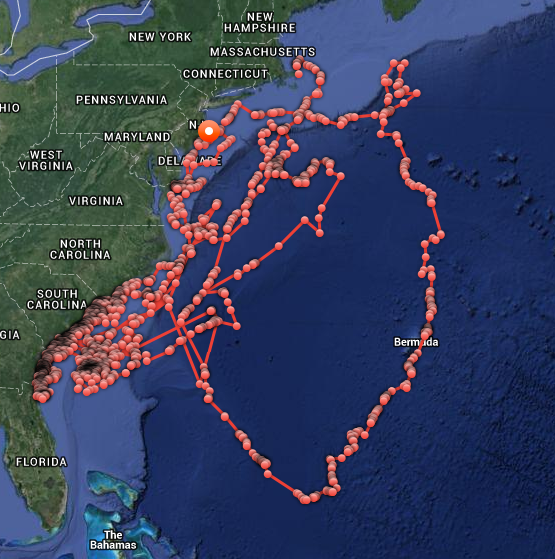 Mary Lee's Travels, Tracked on Ocearch's Shark Tracker
