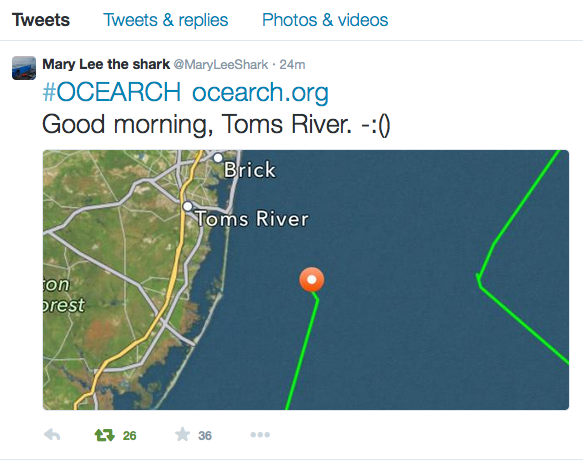 Twitter Screen Capture, @MaryLeeShark's account.