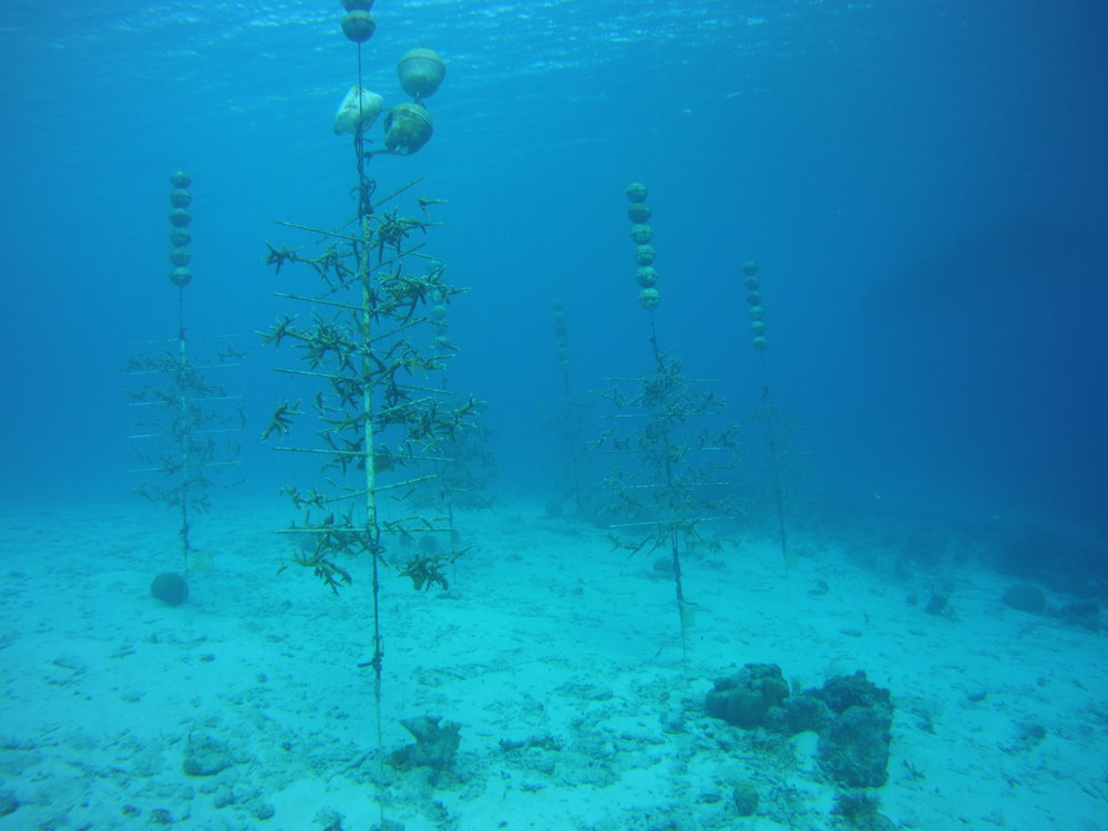 Coral Reef Tree Nursery