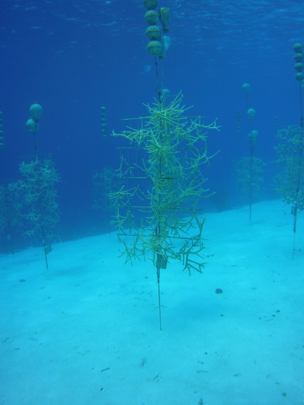 "One of the Many ""Trees"" Of Coral"