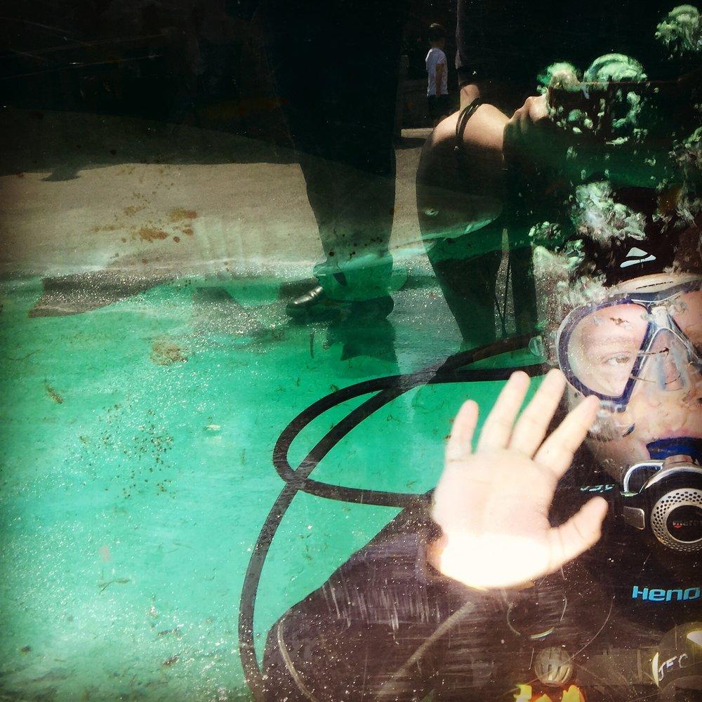 Inaugural Shark Dive, New York Aquarium,Photo Credit: Megan Weber, 2016