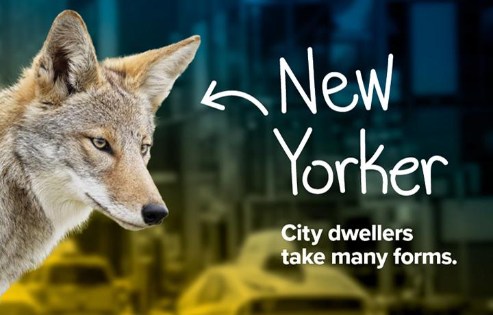 NYCP17-WildlifeNYC-SpringCampaign-Website-Hero-Image3-v2.jpg