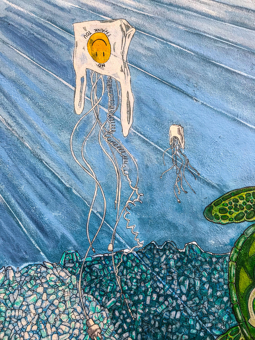Plastic Bag and Charger Jellyfish, Photo Credit: Liz Summit, 2017