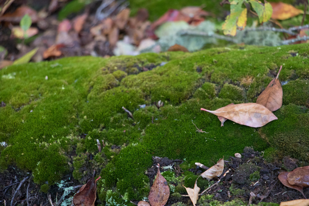 Moss growing on an old log