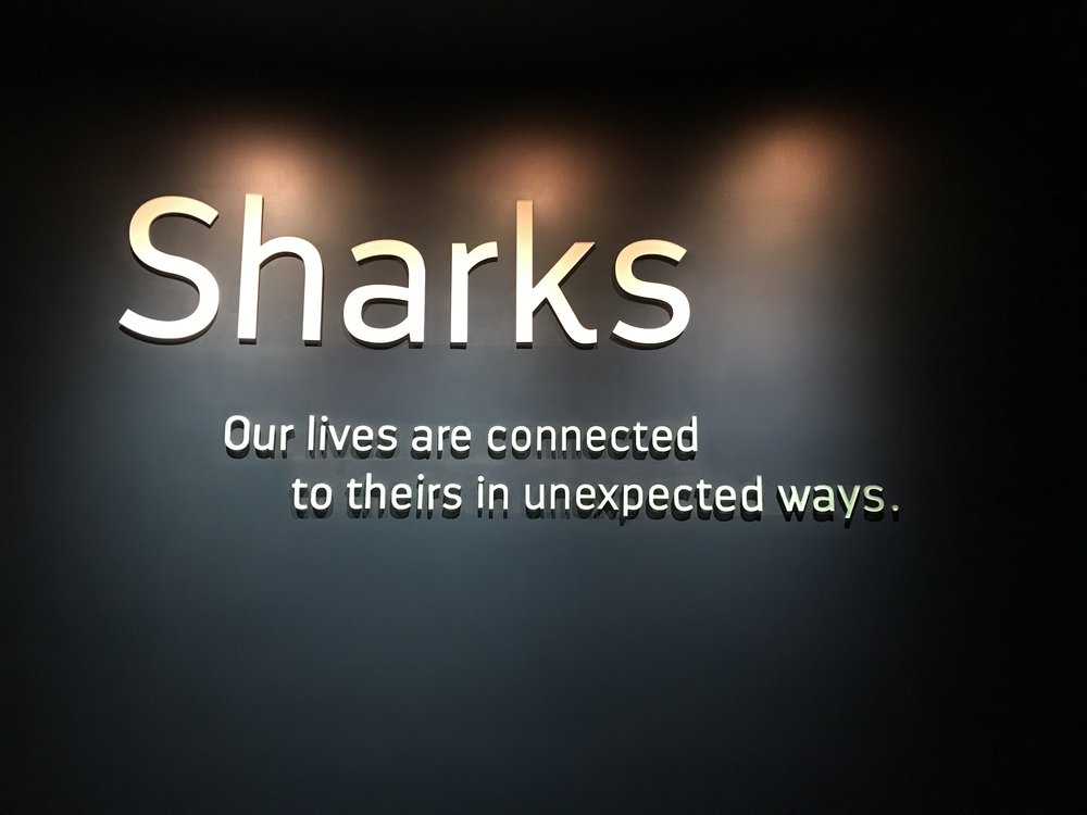 Welcome to Sharks!