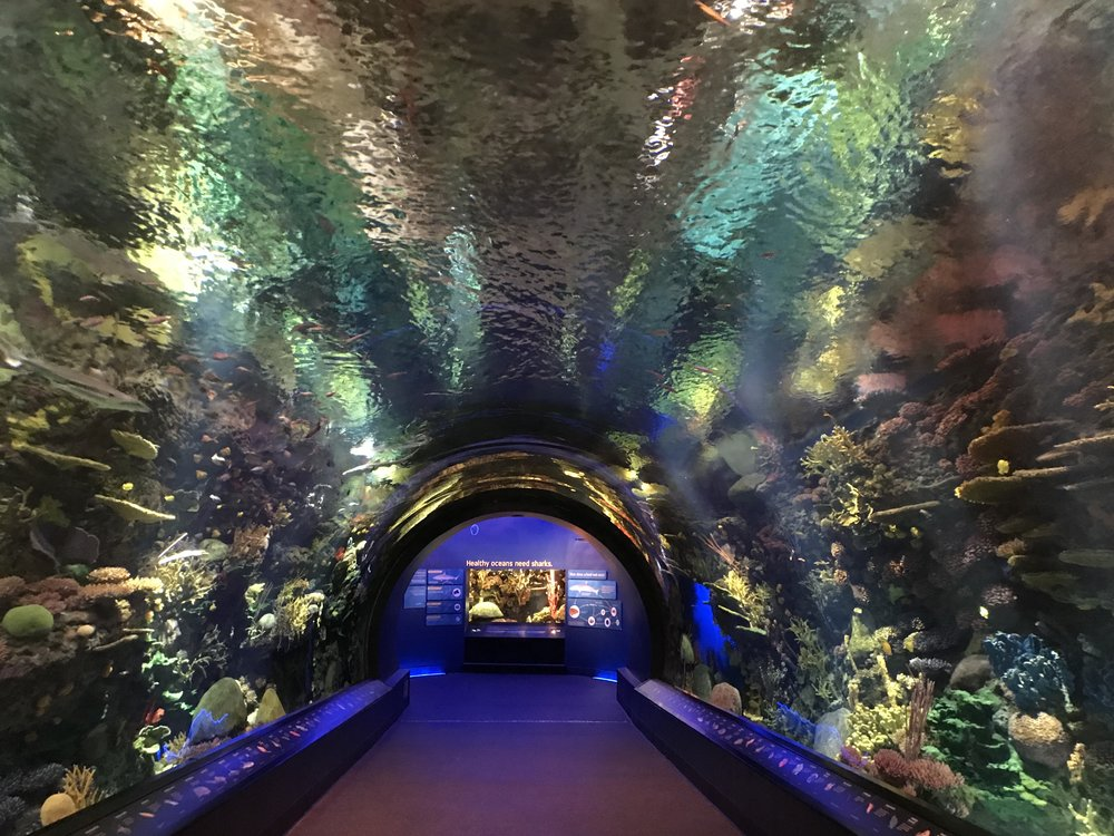 Coral Tunnel