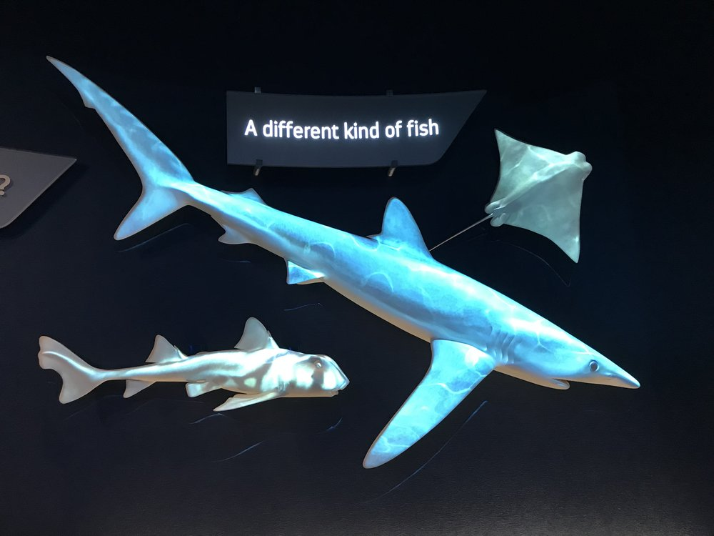 Sharks... A Different Kind of Fish!
