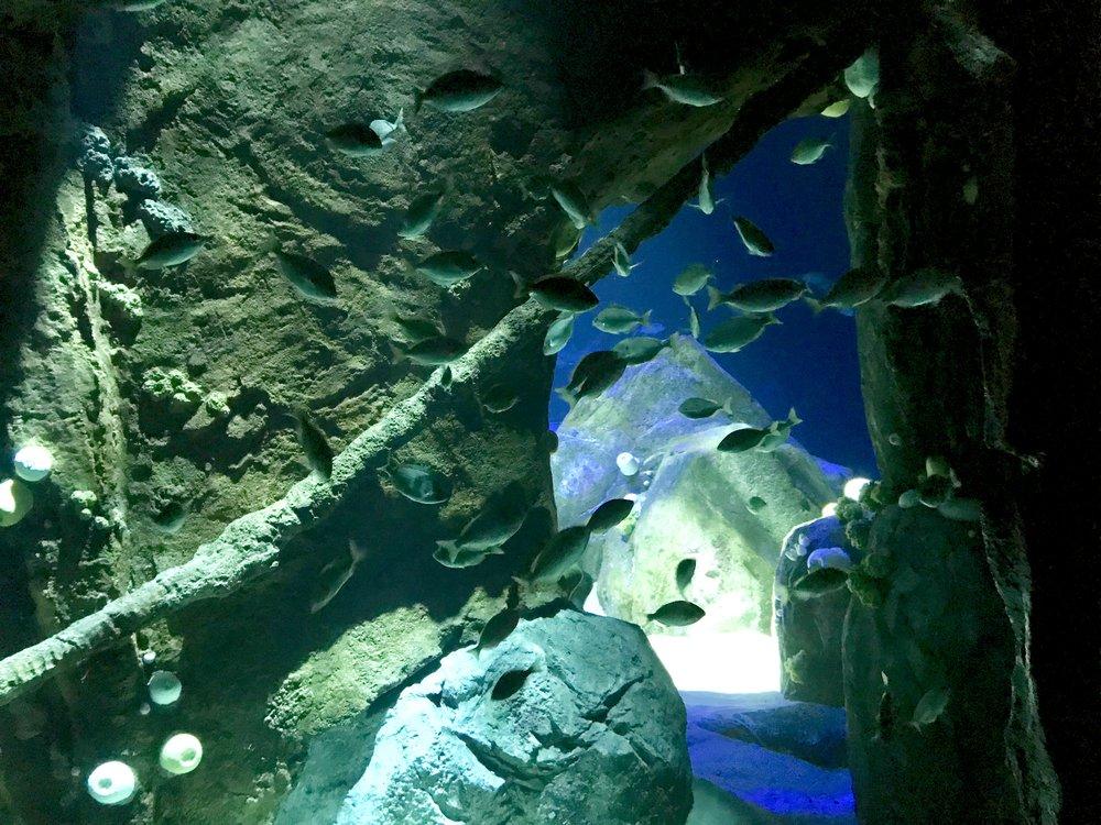 Shipwrecks, 1