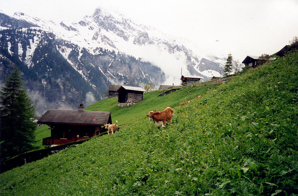 We're staying in a tiny little hotel run by a 90 year old local in the tiny town of Gimmelwald. The town resisted development by getting the land declared an avalanche zone and remains a picturesque mountain village.